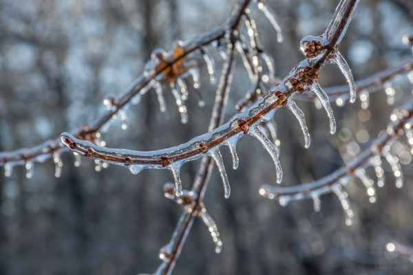 ice on tree branches because it is very cold